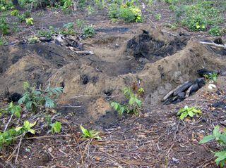 Congo2006WMC 339_edited