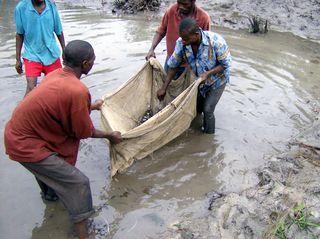 Congo2006WMC 491_edited
